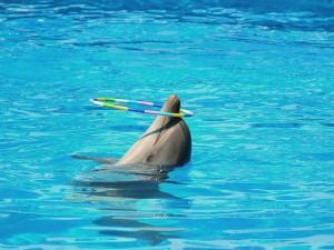 дельфины в египте