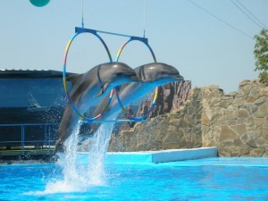 дельфинарий в шарме